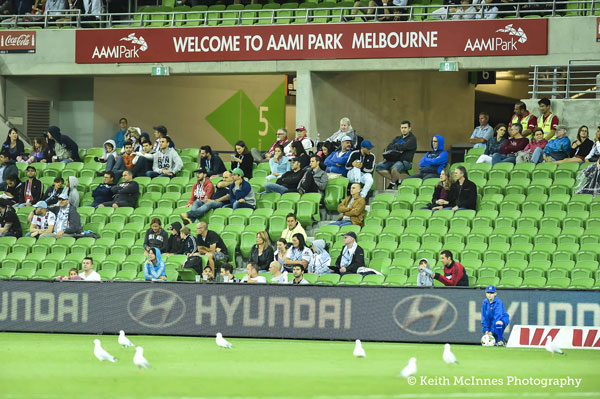 The seagulls of AAMI Park